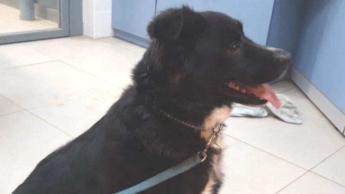 סיימון - כלב לאימוץ - אגודת צער בעלי חיים בישראל