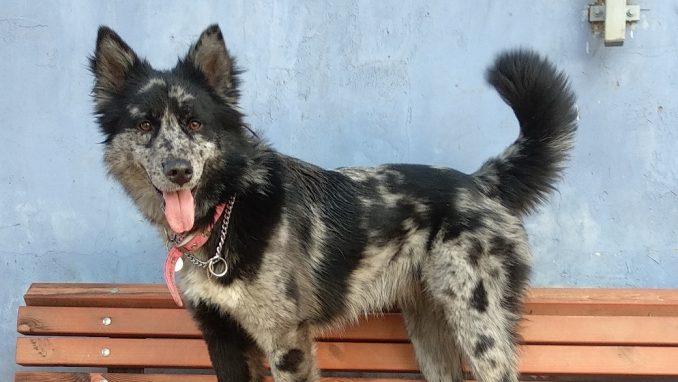 לילי - כלבה לאימוץ - אגודת צער בעלי חיים בישראל
