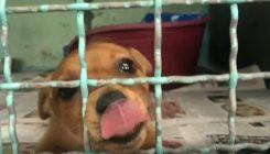 עוזרים לבעלי החיים הנטושים בחורף - אגודת צער בעלי חיים בישראל