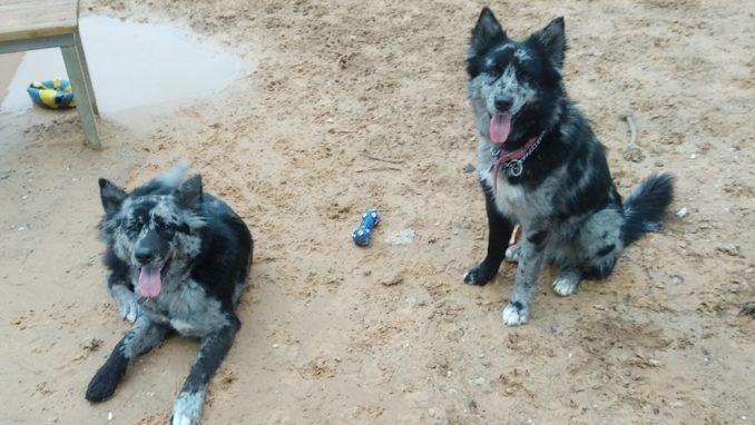צילי לילי - כלבה לאימוץ - אגודת צער בעלי חיים בישראל