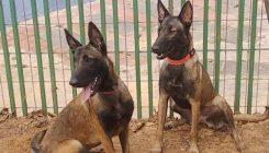 ויקי ובובה - כלבות לאימוץ - אגודת צער בעלי חיים בישראל