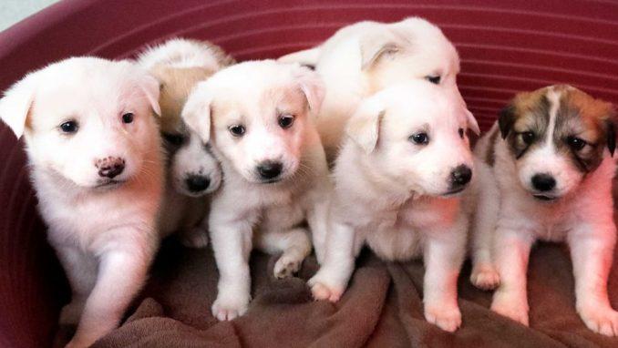 תורמים לבעלי החיים - אגודת צער בעלי חיים בישראל