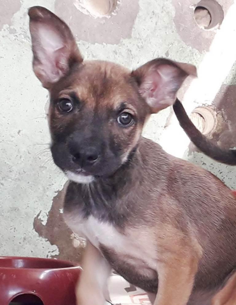 אולי - כלב לאימוץ - אגודת צער בעלי חיים בישראל