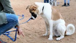 אילוף לאימוץ - תוכנית משותפת של אגודת צער בעלי חיים בישראל ומגמת כלבנות טיפולית בקמפוס ברושים