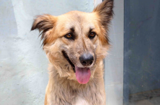 טופי - כלבה לאימוץ – אגודת צער בעלי חיים בישראל