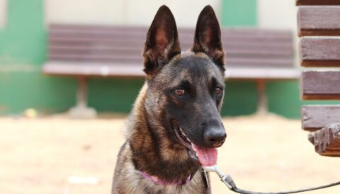ניקיטה - כלבה לאימוץ - אגודת צער בעלי חיים בישראל - צילום: מטיאס פליו