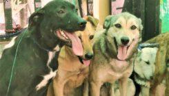 אגודת צער בעלי חיים בישראל קולטת כלבים מבית לחם - צילום: דורון אורסיאנו ויטנר