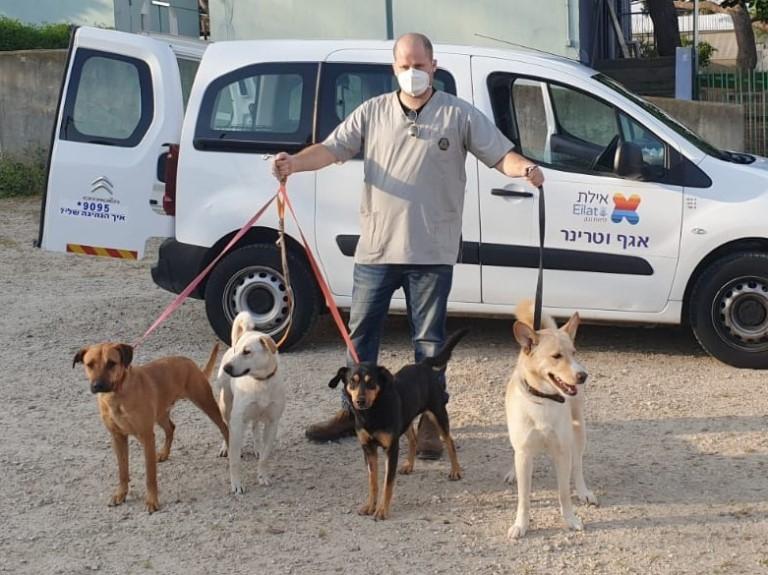 ארבעה כלבים מאילת נקלטו באגודת צער בעלי חיים בישראל