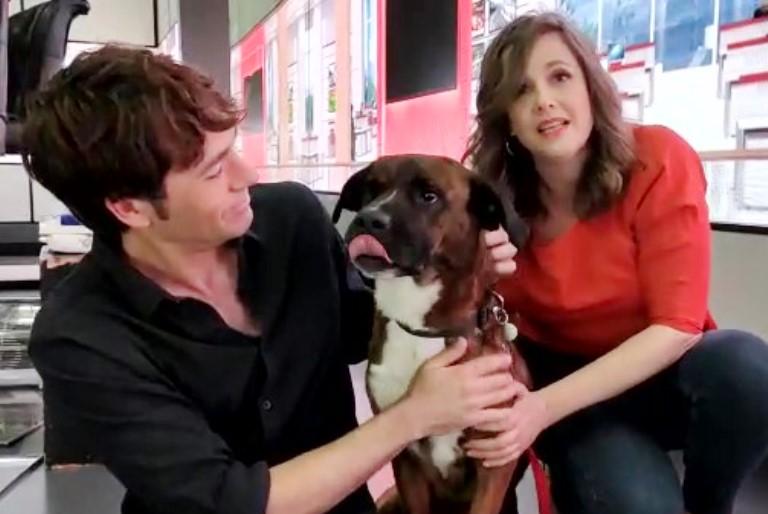 פאולה וליאון רזנברג מארחים בתוכניתם את הכלב טייסון - אגודת צער בעלי חיים בישראל