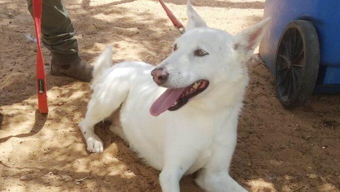 ג'ון - כלבה לאימוץ - אגודת צער בעלי חיים בישראל
