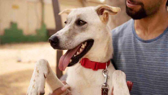 באפי - כלבה לאימוץ - אגודת צער בעלי חיים בישראל - צילום: רעי סולש