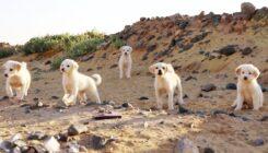 כלבים במזבלה בעיר ערד - אגודת צער בעלי חיים בישראל