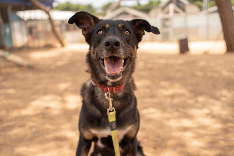 בלה - כלבה לאימוץ - אגודת צער בעלי חיים בישראל - צילום: רעי סולש