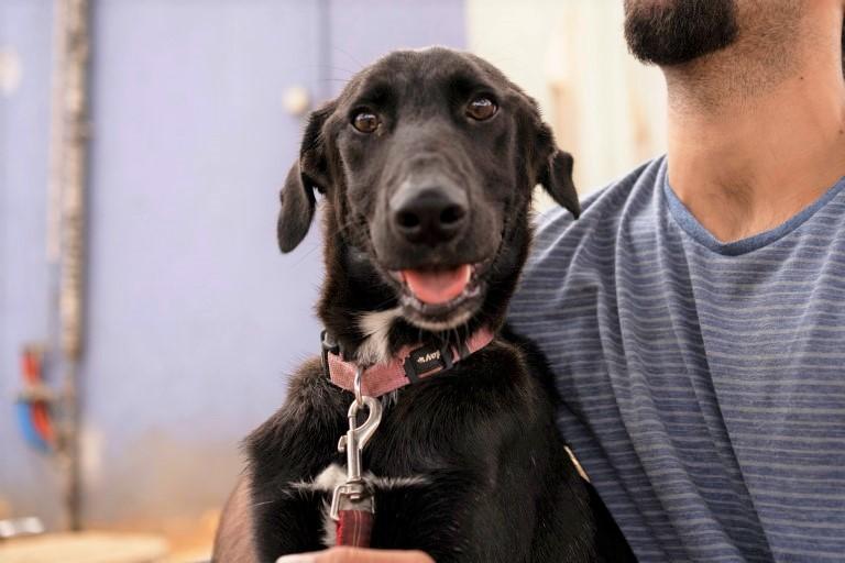 ליליאן - כלבה לאימוץ - אגודת צער בעלי חיים בישראל - צילום: רעי סולש