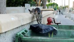 עיקור וסירוס חתולי רחוב - מרפאה וטרינרית -אגודת צער בעלי חיים בישראל