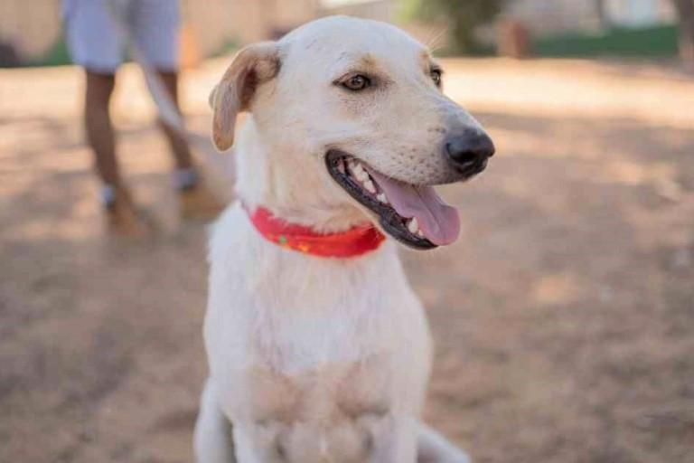אסטרו - כלב לאימוץ - אגודת צער בעלי חיים בישראל - צילום: רעי סולש