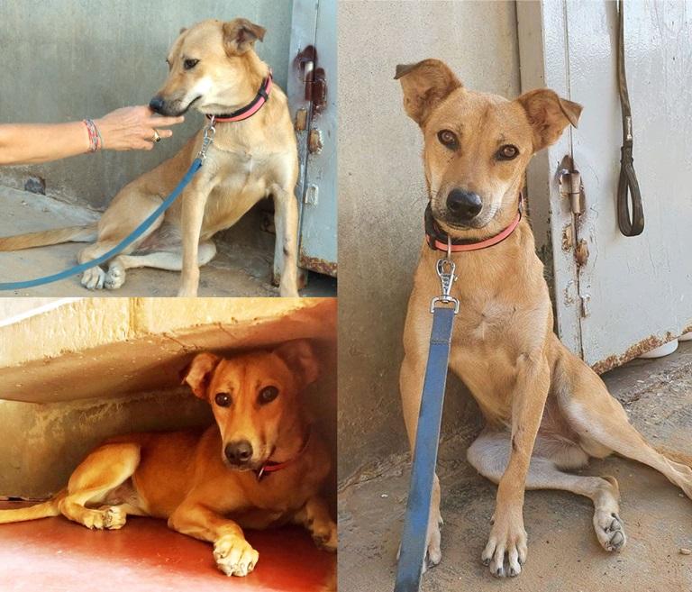 היידי  – כלבה לאימוץ - אגודת צער בעלי חיים בישראל - צילום: אפרת מס
