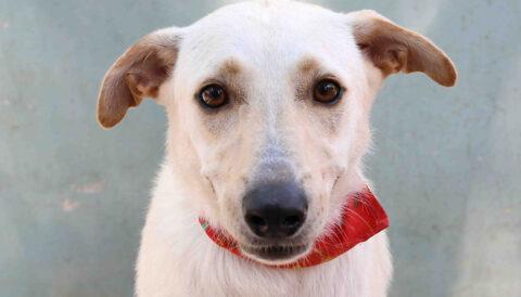 אסטרו - כלב לאימוץ - אגודת צער בעלי חיים בישראל