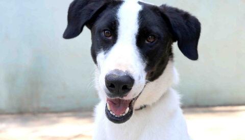 מונזה - כלב לאימוץ - אגודת צער בעלי חיים בישראל