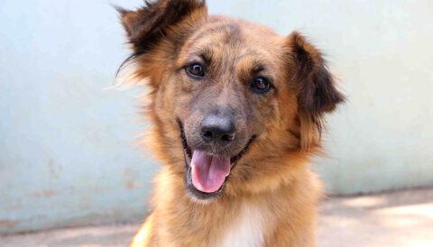 ג'סיקה – כלבה לאימוץ - אגודת צער בעלי חיים בישראל