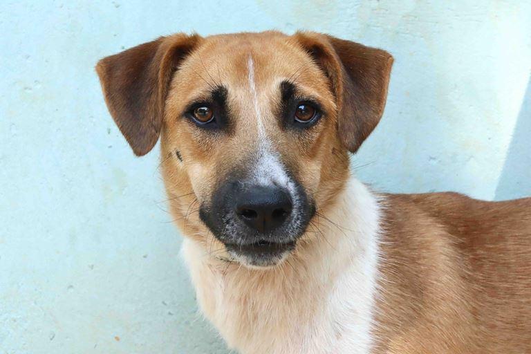 ג'אקס -כלב לאימוץ - אגודת צער בעלי חיים בישראל