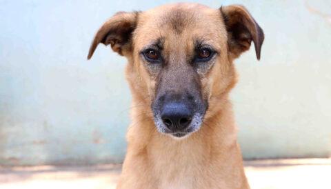 ניזימי - כלבה לאימוץ - אגודת צער בעלי חיים בישראל
