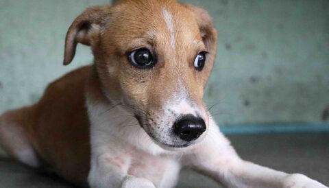 שוקי -כלב לאימוץ - אגודת צער בעלי חיים בישראל