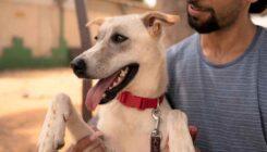 אגרת לחג - ניוזלטר - ראש השנה - אגודת צער בעלי חיים בישראל - צילום: רעי סולש