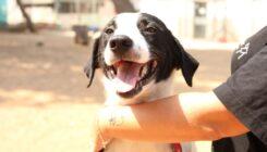 סקאי – כלב לאימוץ - אגודת צער בעלי חיים בישראל