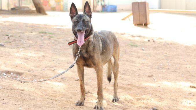 קיארה - כלבה לאימוץ - אגודת צער בעלי חיים בישראל