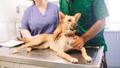 יום בעלי החיים העולמי - מרפאה וטרינרית בתל אביב - אגודת צער בעלי חיים בישראל