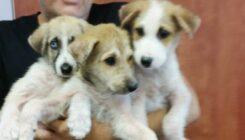 כלבה ושלושה גורים מוזנחים נקלטו באגודה - אגודת צער בעלי חיים בישראל