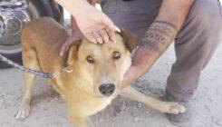 כלבים מאפרת נקלטו באגודה - אגודת צער בעלי חיים בישראל