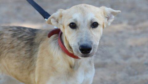 נגה - כלבה לאימוץ - אגודת צער בעלי חיים בישראל