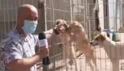 פז רובינזון מבקר בבית המחסה של אגודת צער בעלי חיים בישראל - צילום מסך מתוך כתבה בערוץ רשת 13