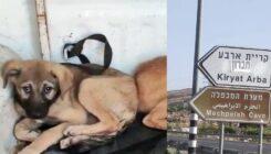 חילוץ גורי כלבים מקריית ארבע - אגודת צער בעלי חיים בישראל