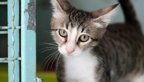 ג'רי – חתול לאימוץ - אגודת צער בעלי חיים בישראל