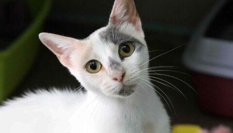 מאמא – חתולה לאימוץ - אגודת צער בעלי חיים בישראל