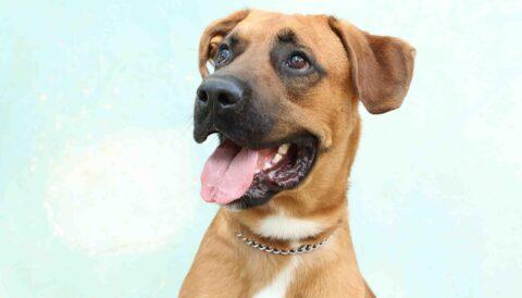 דייגו – כלב לאימוץ - אגודת צער בעלי חיים בישראל