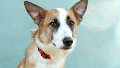 נינה – כלבה לאימוץ - אגודת צער בעלי חיים בישראל