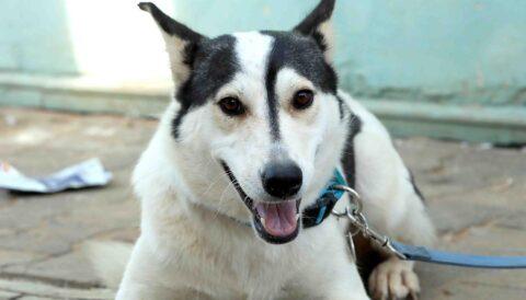 כלנית – כלבה לאימוץ - אגודת צער בעלי חיים בישראל
