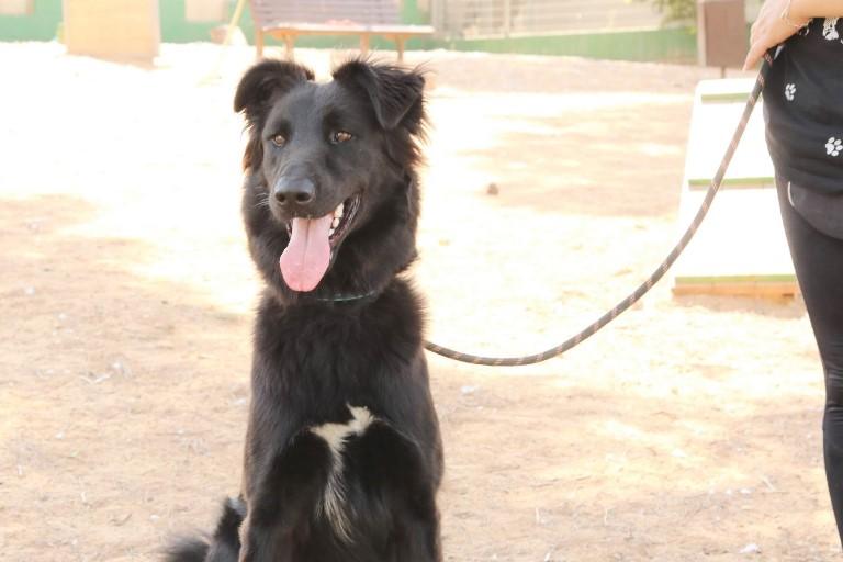 ציון - כלב לאימוץ - אגודת צער בעלי חיים בישראל