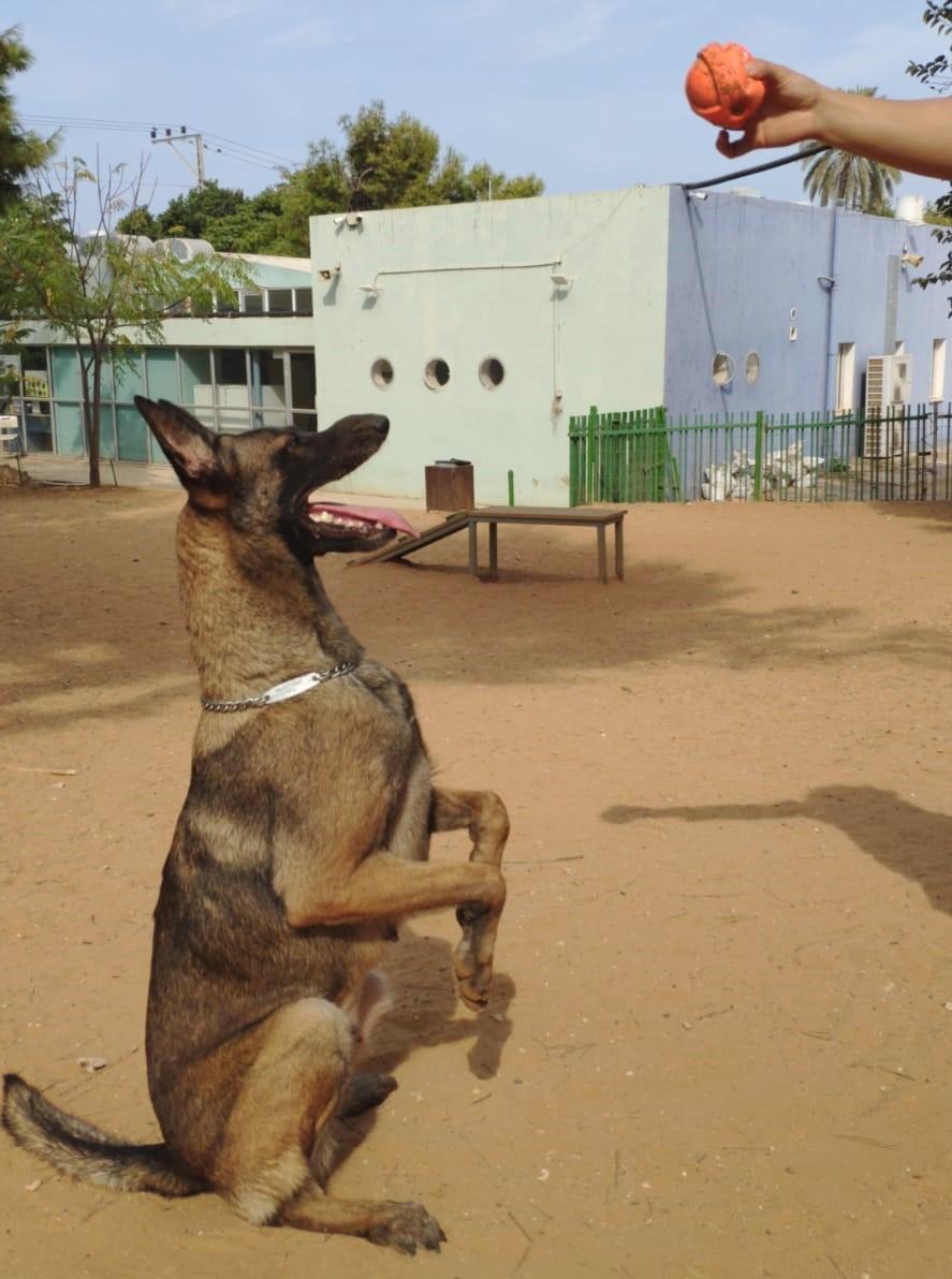 קיארה - כלבה לאימוץ - אגודת צער בעלי חיים בישראל - צילום: אבי לוין