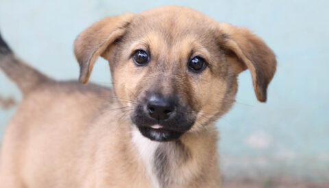 ניקי - כלבה לאימוץ - אגודת צער בעלי חיים בישראל