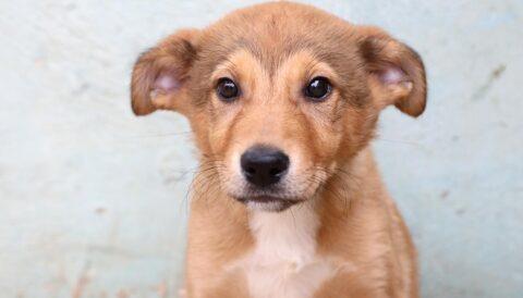 בילי – כלבה לאימוץ - אגודת צער בעלי חיים בישראל