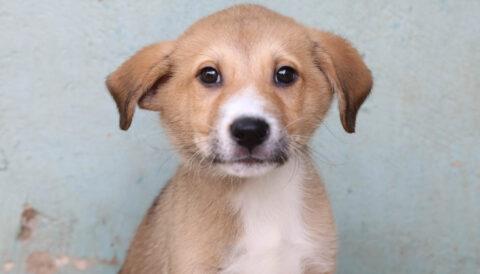 צ'יקי – כלב לאימוץ - אגודת צער בעלי חיים בישראל