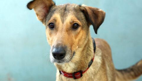 סוזי – כלבה לאימוץ - אגודת צער בעלי חיים בישראל