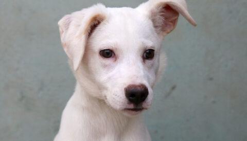 מומו – כלב לאימוץ - אגודת צער בעלי חיים בישראל