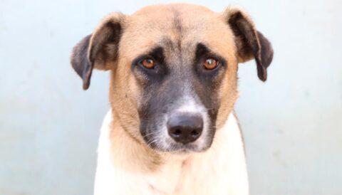 מאמי - כלבה לאימוץ - אגודת צער בעלי חיים בישראל