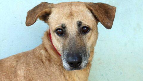 מולי – כלבה לאימוץ - אגודת צער בעלי חיים בישראל